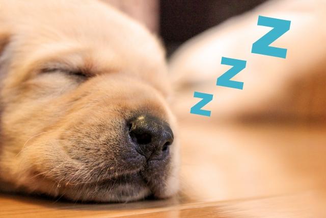 睡眠時無呼吸症候群の簡易検査の費用は?実際に受けた感想。