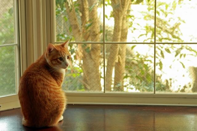 出窓の目隠しのアイデア 100均やdiyで室内から簡単に設置する方法