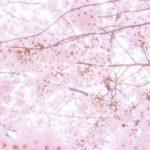 亀城公園の桜の見頃は?花見のライトアップの時間は?屋台はでる?