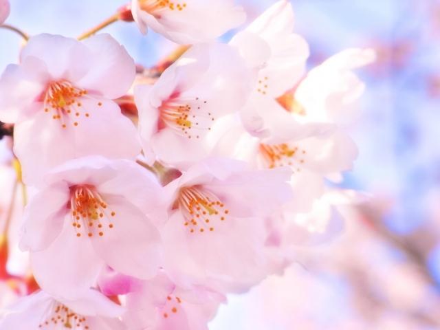 九華公園の桜について 駐車場はある?開花時期は?ライトアップは?