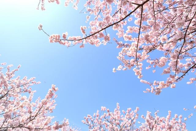 名城公園の桜の見ごろは?花見のライトアップの時間は?屋台はでる?