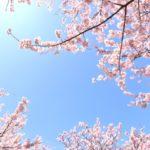 大池公園の桜の見頃は?開花の時期は?ライトアップや屋台はある?